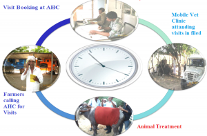 Animal Health Treatment